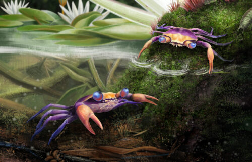 Artistic reconstruction of Cretapsara athanata: The immortal Cretaceous spirit of the clouds and waters is seen.